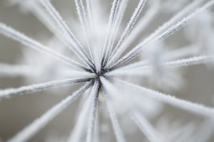 Abstract of frozen plant